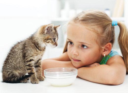 Настоящее молоко