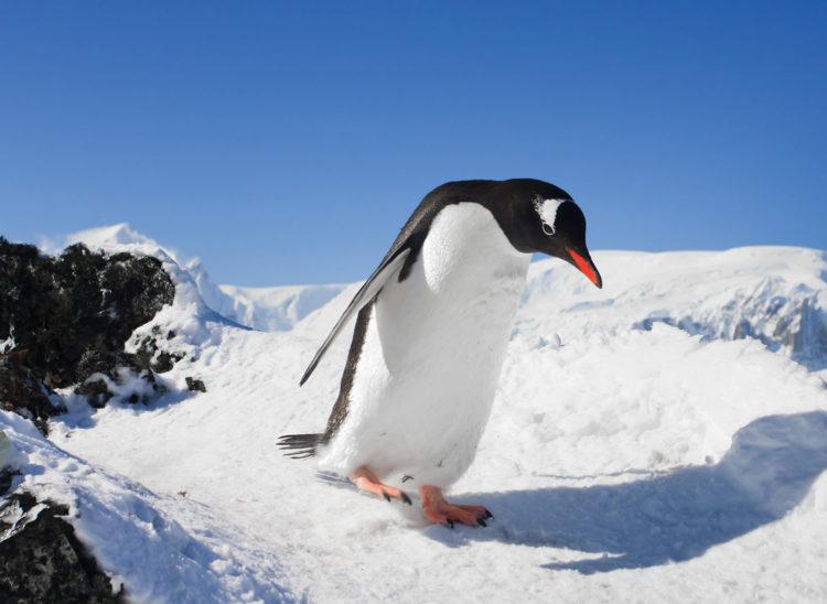 Ледяные ноги