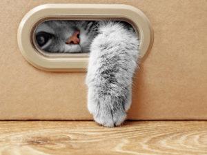 Как подготовиться к появлению котят?